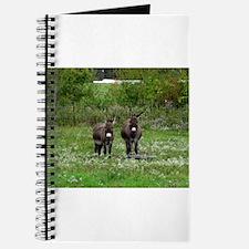 Two Miniature Donkeys (2) Journal