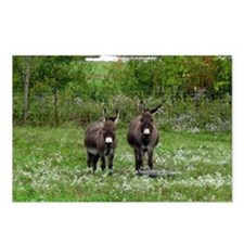 Two Miniature Donkeys (2) Postcards (Package of 8)
