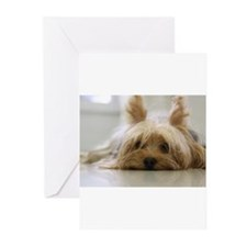 Cute Yorkie Greeting Cards (Pk of 10)
