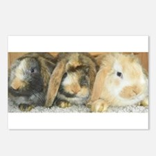 Harlequin Mini Lop Trio Postcards (Package of 8)