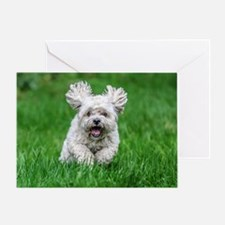 Funny Bichon frise Greeting Card