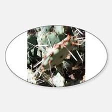 Typical Tucson Prickly Pear - Low Growing Decal
