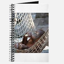 OrangUtan014 Journal