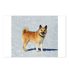IcelandicSheepdog018 Postcards (Package of 8)