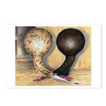 Jacobin Pigeons Postcards (Package of 8)