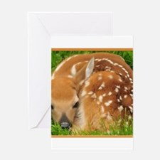 Resting Fawn Deer Greeting Cards