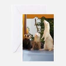 Unique Ferret Greeting Cards (Pk of 10)