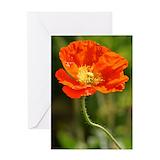 Orange poppy Greeting Cards