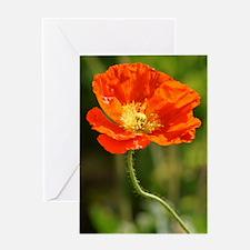 Cute Orange flower poppy Greeting Card