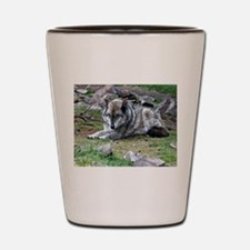 Captured by Time Shot Glass