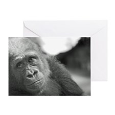 Cute Bronx zoo Greeting Card