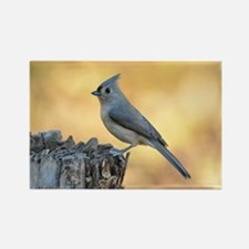 Tufted Titmouse 2 Rectangle Magnet Magnets