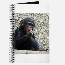 Chimpanzee003 Journal