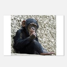 Chimpanzee003 Postcards (Package of 8)