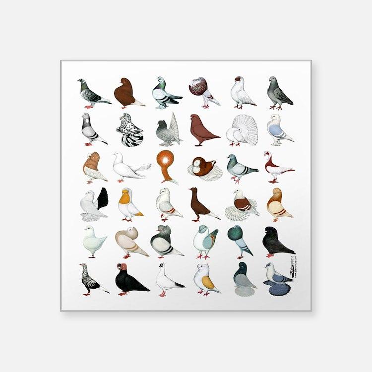 "36 Pigeon Breeds Square Sticker 3"" X 3"""