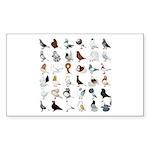 36 Pigeon Breeds Sticker (rectangle 10 Pk)