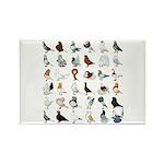 36 Pigeon Breeds Rectangle Magnet (10 Magnets
