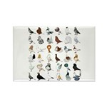 36 Pigeon Breeds Rectangle Magnet Magnets