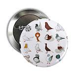 "36 Pigeon Breeds 2.25"" Button (100 Pack)"