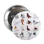 "36 Pigeon Breeds 2.25"" Button (10 Pack)"