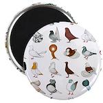 36 Pigeon Breeds Magnet Magnets