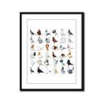 36 Pigeon Breeds Framed Panel Print