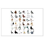 36 Pigeon Breeds Large Poster