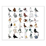 36 Pigeon Breeds Small Poster
