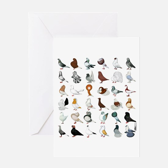 36 Pigeon Breeds Card Greeting Cards