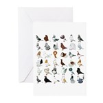 36 Pigeon Breeds Greeting Cards (pk Of 10)