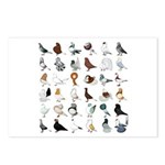36 Pigeon Breeds Postcards (package Of 8)