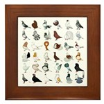 36 Pigeon Breeds Framed Tile