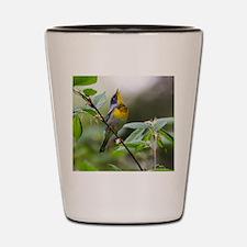 Cute Songbird Shot Glass