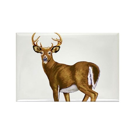 American White Tail Deer Buck Rectangle Magnet