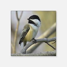 Chickadee Bird Sticker