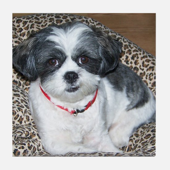 Shih Tzu Dog Photo Tile Coaster