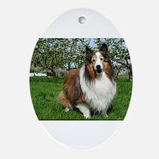 Sheltie Orchard Oval Ornament