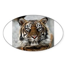 Tiger009 Decal