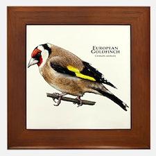 European Goldfinch Framed Tile