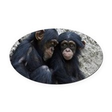 Chimpanzee002 Oval Car Magnet