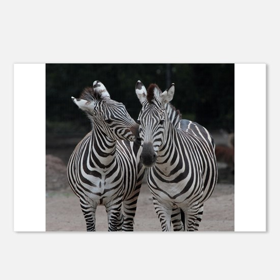 Zebra005 Postcards (Package of 8)