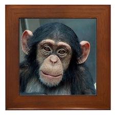 Chimpanzee 007 Framed Tile