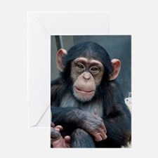 Chimpanzee 007 Greeting Cards