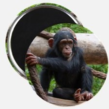 Chimpanzee20151004 Magnets