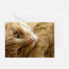 Coy Cat Greeting Card