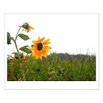 Sunflower In Field Posters