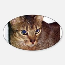 abyssinian second Decal