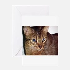 Abyssinian Greeting Cards