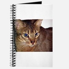 abyssinian second Journal