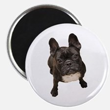 Unique French bulldog Magnet